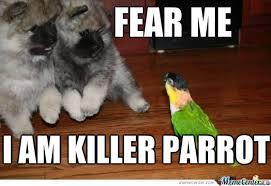 Parrot Meme - killer parrot by zajabys99 meme center