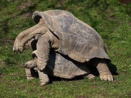 happy hump day lol wednesday images pinterest zoos