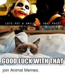 Good Luck Cat Meme - lets put a s mile on that face good luck with that join animal memes