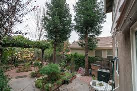 what to do about a backyard redwood tree threatening towards my