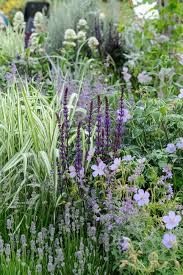 salvia geranium lavender and grass a combo that comes back in a