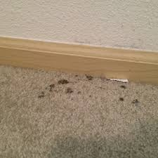 100 does mold smell remove mold from your home and keep it
