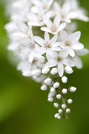 flowers images 185 best earth u0027s laughter flowers images on pinterest plants