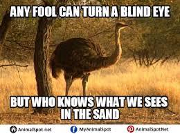 Ostrich Meme - ostrich memes pictures png