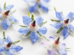edible blue flowers almond fairy cakes with candied borage flowers and olive