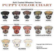 scwtca puppy color chart