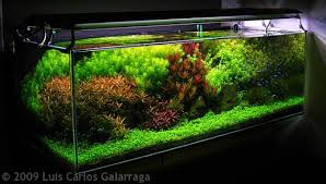 Aquascape Design Dutch Style Aquascape Design Nature Aquariums
