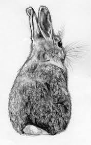 rabbit sketch google search m rachel curry i heart this lots