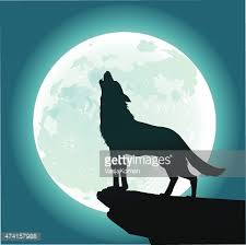 lone wolf howling at the moon vector getty images