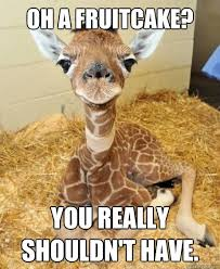 Fruitcake Meme - oh a fruitcake you really shouldn t have ungrateful giraffe