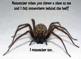 Funny Spider Meme - funny spider meme