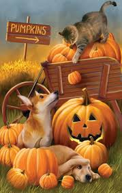 Halloween In The Usa 106 Best Autumn Splendor Images On Pinterest Animals Fall And