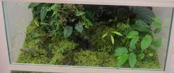 terrarium and vivarium maintenance u003e u003e amphibian care