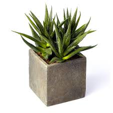 plant on desk 3 great plants to keep on your desk cubicles office environments