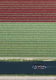 Netherlands Tulip Fields Photos Show Just How Beautiful Netherlands U0027 Tulip Fields Are