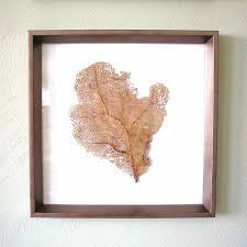 dried sea fans for sale sea fan art sand and sisal