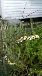 bird attracting native plants 374 best butterfly bird bat u0026 bee attracting garden images on
