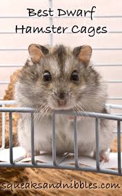 Hamster Cages Cheap Best Dwarf Hamster Cages A Complete Guide With Top Reviews