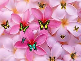 cute backgrounds for desktop brown and pink backgrounds cute cute lovely girly backgrounds