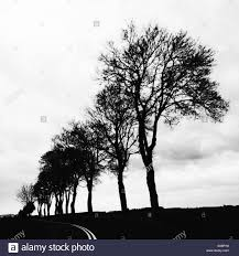 black trees stock photo royalty free image 309981036 alamy