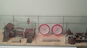 Hamster Cages Cheap Huge Habitat For Roborovski Hamsters From Ikea Youtube