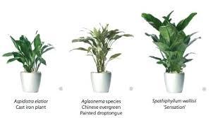 low light house plants low light indoor plants interior ezpass club