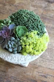 deco jardin a faire soi meme comment créer des arrangements de plantes grasses