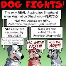 problems with australian shepherds about the australian shepherd