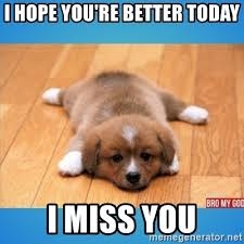 Feel Better Meme - hope you feel better puppy mne vse pohuj