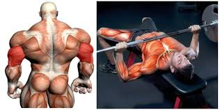 Crush Grip Dumbbell Bench Press Performing The Close Grip Bench Press Fitness And Power