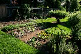 7 all natural diy non toxic pesticides for your vegetable plots