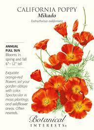 amazon com mikado california poppy seeds 1 gram perennial