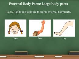 environmental science evs body parts class i