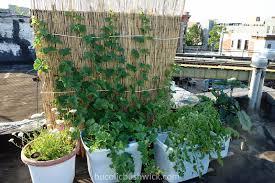 download rooftop vegetable garden solidaria garden