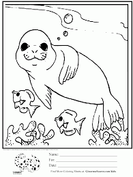 seal swimming with fish coloring page coloring home