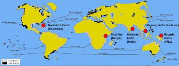 Bahamas On World Map Mangroves Map