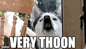 Husky Meme - very thoon husky dog meme gif