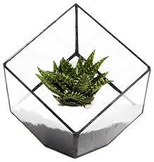 jack london square terrarium contemporary terrariums by