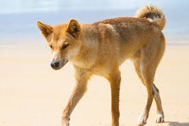 20 Great Dog Walks Around Sydney And Central Coast Australian 28 Day Sydney To Melbourne Tour Package Sydney To Cairns Alice