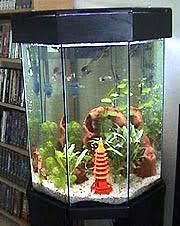 decorating aquariums with ornaments including rocks and plastic