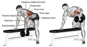 Dumbbell Bench Press Form How To Perform Barbell Dumbbell Bent Over Rows With Proper Form
