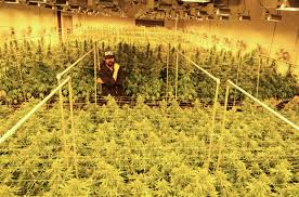 damian marley is converting a california prison into a pot farm