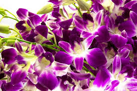 purple orchids purple orchids bouquet on white background stock photo colourbox