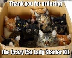 Crazy Dog Lady Meme - crazy cat lady holy cuteness pinterest crazy cat lady cat