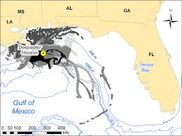 Tampa Bay Florida Map by Eckerd College Dolphin Project Eckerd College