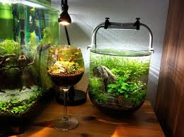 Aquascape Fish 211 Best Aquascaping Images On Pinterest Aquascaping Planted
