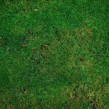 concimazione tappeto erboso concimazione prato