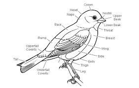 bird id skills field marks all about birds