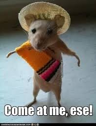 Rodent Meme - come at me ese funny hamster meme image