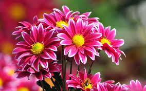 flowers images images of beautiful flowers qygjxz